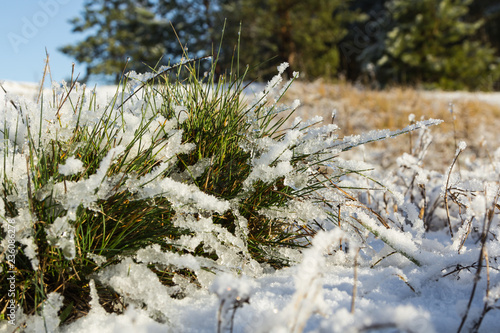 Leinwanddruck Bild a bunch of green grass covered with snow in the end of November