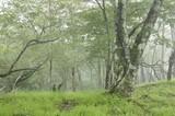 丹沢の森 - 236088658