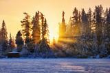 Winter sunset in Slovakia, sunrays through old fir trees © e_polischuk
