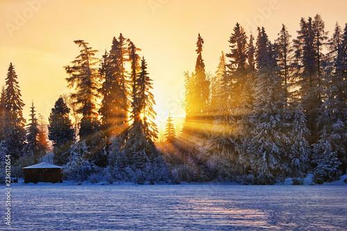 Winter sunset in Slovakia, sunrays through old fir trees