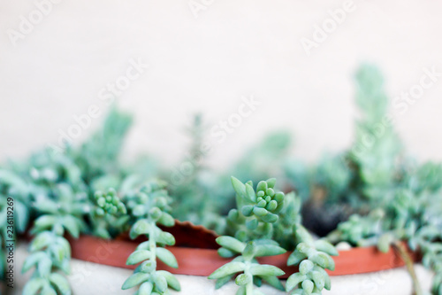 Succulent on pastel background. Minimal creative stillife. - 236119269