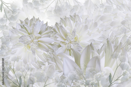 Floral white background. Dahlias flowers close-up on a white background. Petals of flowers. Greeting card. Nature..