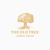 The Old Tree Abstract Vector Sign, Symbol or Logo Template. Hand Drawn Oak Tree Sketch Sillhouette with Retro Typography. Vintage Emblem.