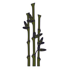 Bamboo asian plant © Jemastock