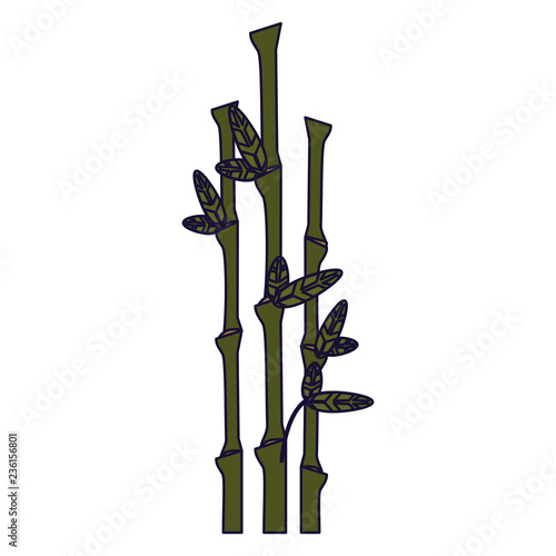 Bamboo asian plant