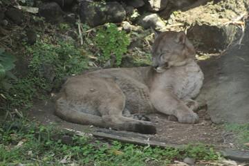 Animal sauvage dans le milieu naturel