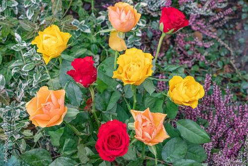 Rosen schmücken ein Grab