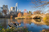 The pond in Central park in New York City at autumn day, USA - 236231669