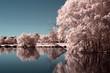 Quadro Parc rose