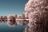 Fototapeta Krajobraz - Parc rose © Zian