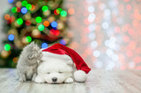 Kitten sniffing sleepy white fluffy samoyed puppy in red santa hat  on a background of the Christmas tree. Empty space for text