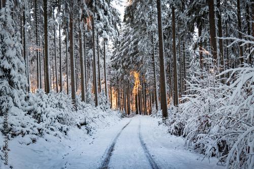 Waldweg in das Abendrot