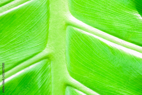 Closeup nature green background leaf blurred and natural plants branch in garden at summer under sunlight concept design wallpaper view with copy space add text. - 236275818