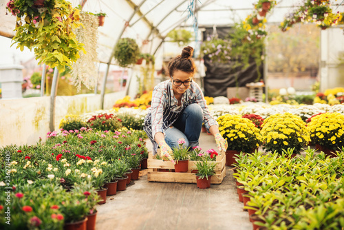 Smiling female florist putting flowers in crate while kneeling in greenhouse. Flowers in pots all around. - 236278400