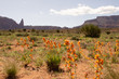 wild flowers in the southwest