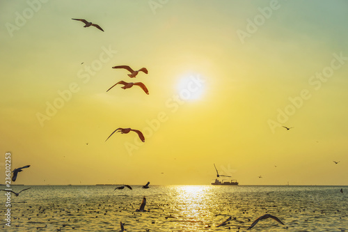 fototapeta na ścianę seagull birds flying in sunset over the sea