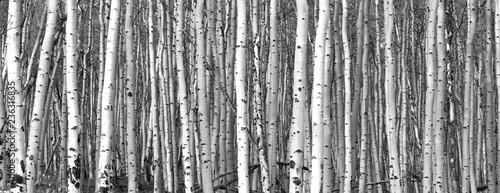 Black and white trees background pattern - 236316835