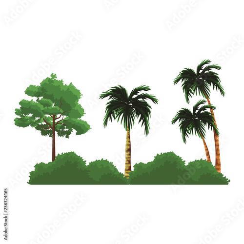 Trees nature landscape - 236324465