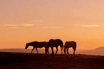 Wild Horses Silhouetted at Sunset