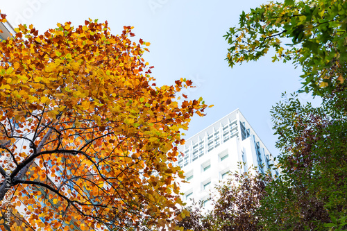 (東京都ー都市風景)丸の内オフィス街の秋6