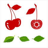 Vector cherry fruits isolated on white background.