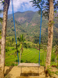 rice terrace and swing