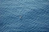 oiseau de mer à la peche