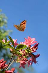 Schmetterling 491
