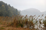 High grass and forest by the lake in a misty morning. © Miroslav