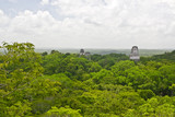 Aerial view over jungle around Mayan temples in Tikal, Guatemala, Central America  - 236476412