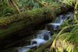 Mount Rainier National Park, WA, USA.  - 236490080