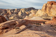 A family of female Desert Bighorn Sheep in Valley of Fire State Park. Taken in Nevada, United States.