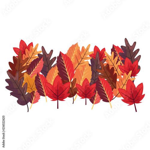 kolory liści dekoracji białe tło