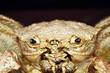 Big sea crab. Dried crab. Terrible sea monster. Amphibious animals.