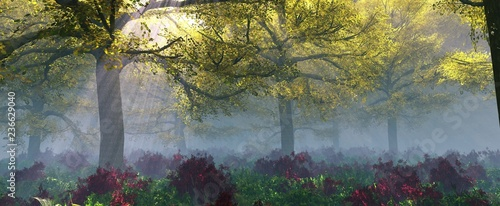 Beautiful morning forest in the haze, autumn trees in the fog,