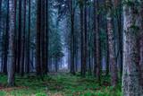 forest in the morning © Stanislav