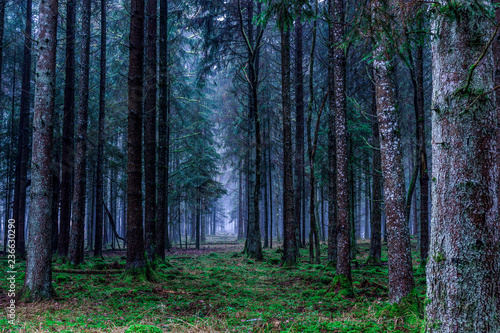 forest in the morning - 236630290