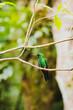 Leinwandbild Motiv schöner Kolibri in Costa Rica - Monte Verde