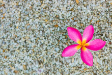 """Постер, картина, фотообои """"один тайский розовый цветок плюмерия фоне песка и воды"""""""