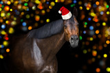 Christmas horse with red santa hat on bokeh background © callipso88