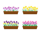 Spring flowers in long containers isolated on white background.