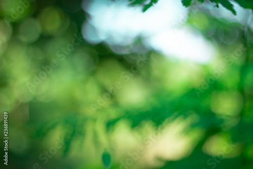 fototapeta na ścianę green blurred backdrop of nature, circle light wallpaper, white bokeh background