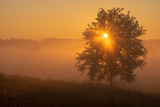 Summer sunrise with alone young oak over foggy meadow