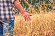 Man enjoying the meadow while touching the grass / wheat plants.