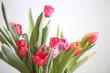 Tulip - 236969260