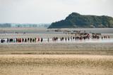 Groupe de personnes traversant la baie du Mont-Saint-Michel, département de la Manche, Normandie, France © Philippe Prudhomme