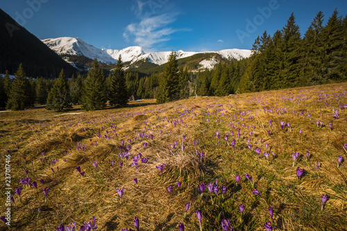 Spring in polish Tatra Mountains