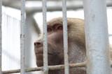 Prisión - 237035279