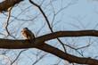 Leinwandbild Motiv Vogel auf einem Baum in Tokio