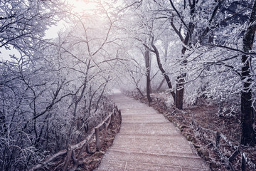 Winter road view in Huangshan National park.